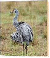 Ruffled Crane Wood Print