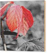 Rusty Leaves Wood Print