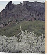 Saddle Rock And Apple Blooms Wood Print