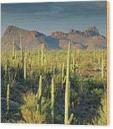 Saguaro Cactus In Sonoran Desert And Wood Print