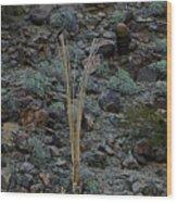 Saguaro Spines Wood Print