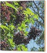 Sambucus Elderberry Sureau Wood Print