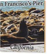 San Francisco's Pier 39 Walruses 1 Wood Print