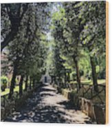 San Paolo Alle Tre Fontane Wood Print