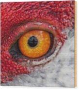 Sandhill Crane Eye Wood Print
