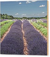 Scent Of Lavender Of Provence Wood Print