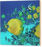 School Of Butterfly Fish Swimming On Wood Print
