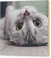 Scottish Fold Cat Lying On The Back Wood Print