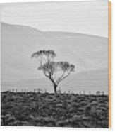 Scottish Highland Tree In Black And White Wood Print
