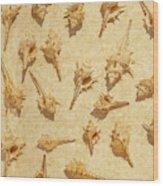 Sea Shell Scroll Wood Print