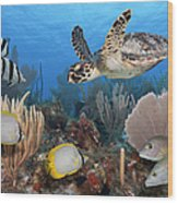 Sea Turtle, Fish, On Colorful Tropical Wood Print