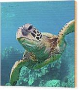 Sea Turtle, Hawaii Wood Print
