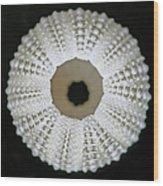 Sea Urchin Shell Wood Print