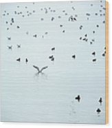 Seagulls And Ducks At Lake Constance Wood Print