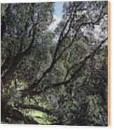 Secular Tree Wood Print