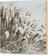 Sepia Snow Wood Print
