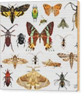 Set Of Insects On White Background Wood Print