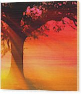 Shade Tree At Dawn Wood Print