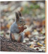 Shadow Boxing. Red Squirrel Wood Print