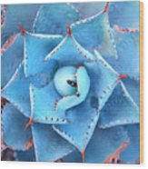 Sharp Pointed Agave Plant Leaves Wood Print