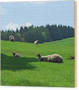 Sheep And Lambs In A Field Wood Print