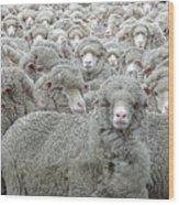 Sheep Looking Wood Print