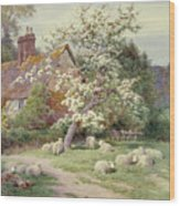 Sheep Outside A Cottage In Springtime Wood Print