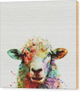 Sheep Portrait Wood Print
