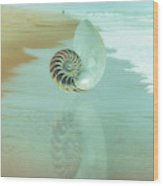 Shell Reflections In The Sand In The Soft Dawn Wood Print