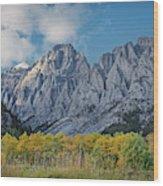 Shining Poplars Wood Print