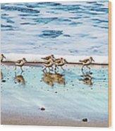 Shorebirds Wood Print