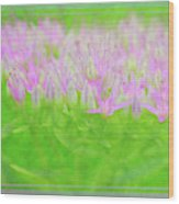 Showy Stonecrop Framed Wood Print