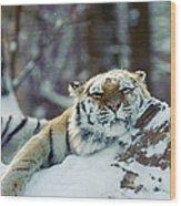 Siberian Tiger At The Bronx Zoo Is Wood Print