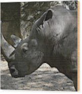 Side Profile Of A Large Rhinoceros With Two Horns  Wood Print
