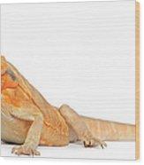 Silkbacks Scaleless Bearded Dragon Wood Print