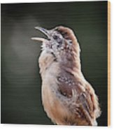 Singing Wren Wood Print