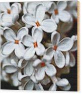 Small White Flowers Digital Wood Print