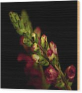 Snapdragon In Red Wood Print