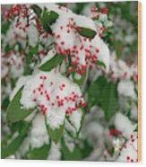 Snow Covered Winter Berries Wood Print