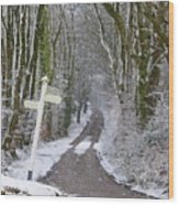 Snow In The Trees Wood Print