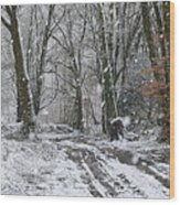 Snow In The Woods Wood Print