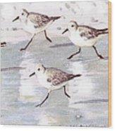 Snowy Plover Sandpipers On Siesta Key Beach, Wide-narrow Wood Print