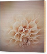Soft, Subtle Dahlia Wood Print