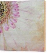 Softly Gerbera Wood Print