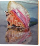 Solitary Conch Wood Print