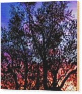 Sonoran Sunrise Ironwood Silhouette Wood Print
