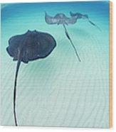 Southern Stingray Cayman Isalnds Wood Print