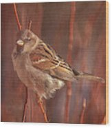 Sparrow In The Sunshine Wood Print