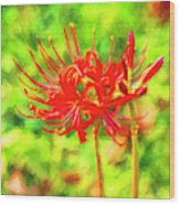 Spider Lily Cezanne Wood Print