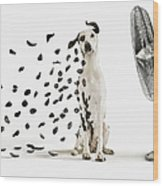 Spots Flying Off Dalmation Dog Wood Print
